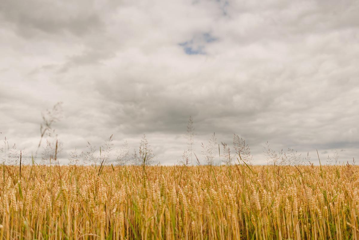 Shropshire landscape
